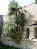 ClaudioM_albero a rovescio Forte Altavilla_1