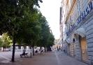 Sibilla_Tigli nuovi Piazza Roma_1